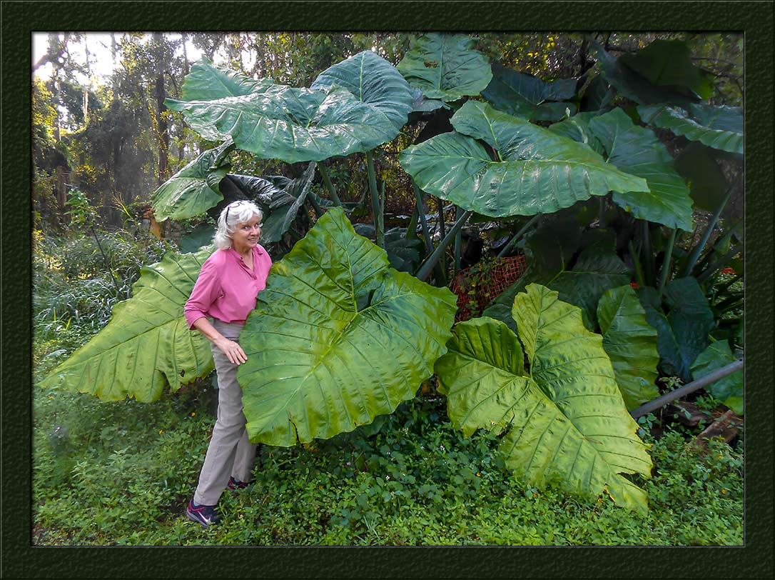 Marlene-Big-Leaf-5095