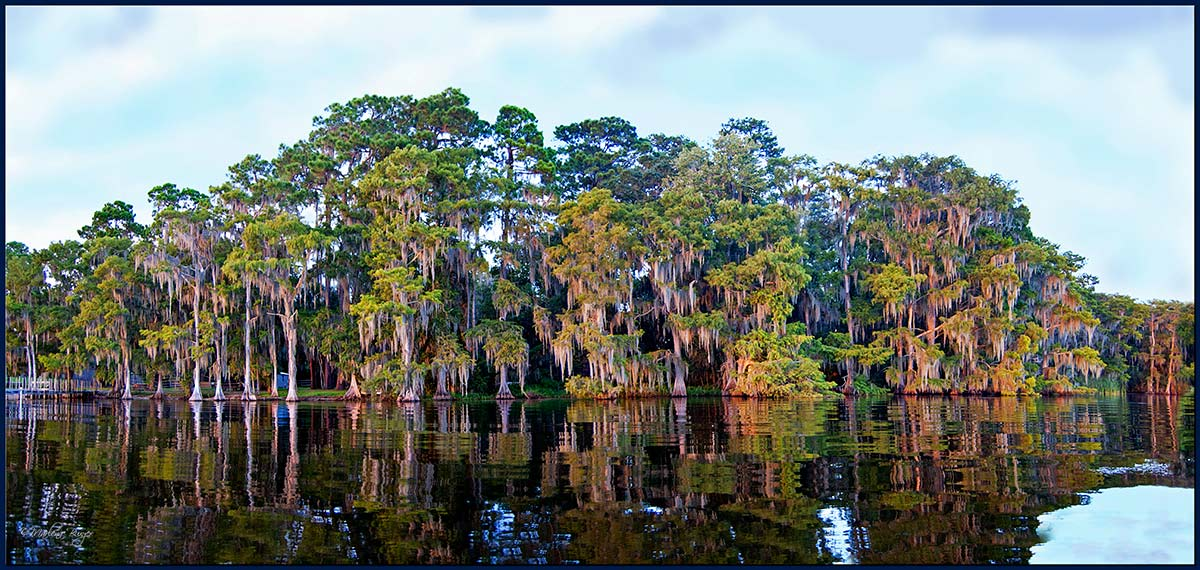 Cypress-Lake_Panorama1 - Copy