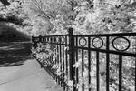 High_Park_1-IR_Web