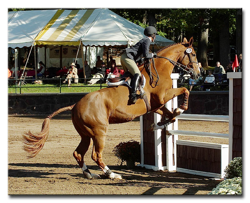 US Equestrian Team Talent Search #10983
