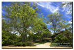 IA7X2204 - Willowwood Arboretum Willowwood Galler