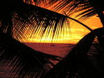 hnl_palm_sunset_zoom_19oct03