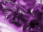 orchid purple oil colorized