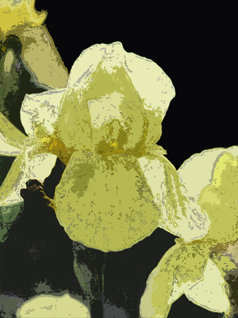 yellow iris cutout