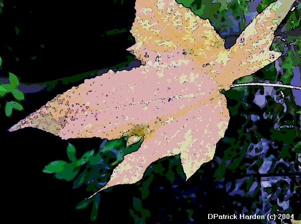 sweetgum leaf manipulated