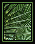 green palm framed