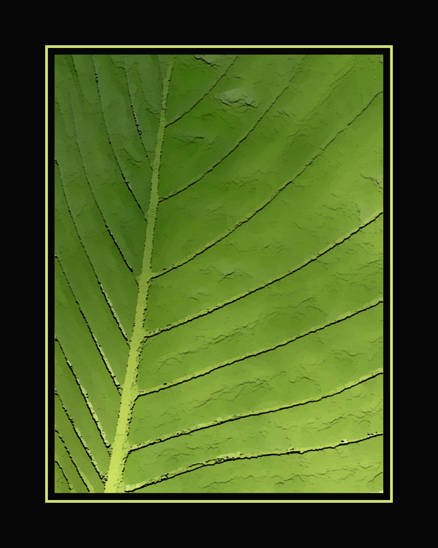 leaf close veins