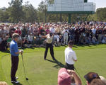 Tiger Backswing