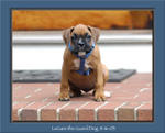 LeGare the Boxer Pup