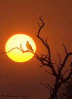 Izak Singita Eagle sunset