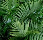 wet_ferns2.jpg