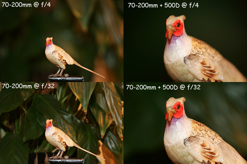 500D and 70-200mm Examples