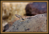 Lizzard2_web