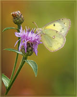 Evolution104-Butterfly