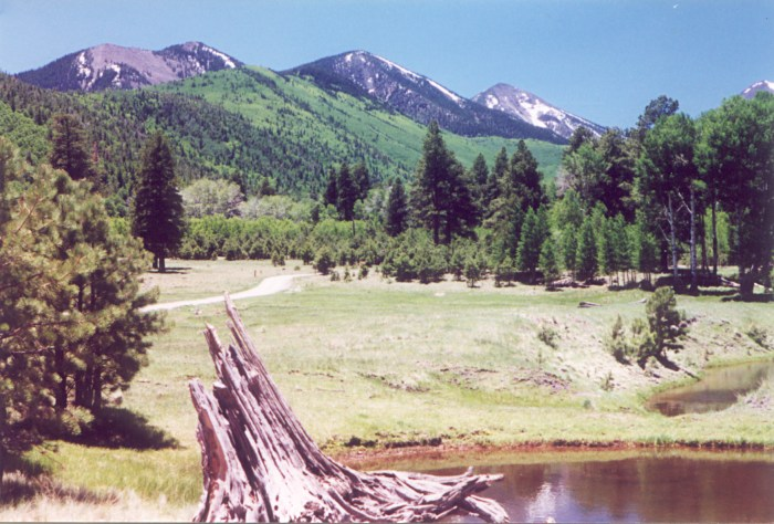 Lockett Meadow - San Francisco Peaks