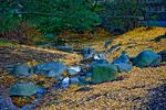 _DSC6654-Last-of-the-leaves-2