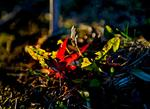 _DSC6632-Spash-of-light
