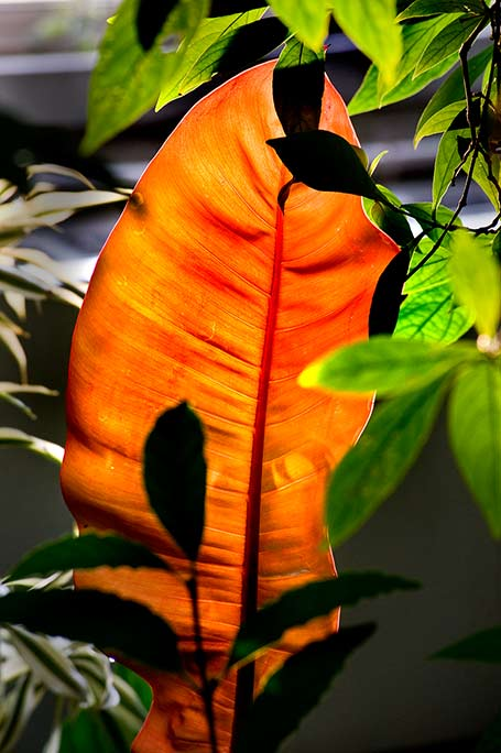 _DSC6606-Backlit-orange-and-greens