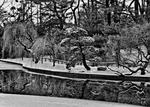 _DSC7504-Snow-and-curves-bw