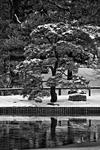 _DSC7529-Snow-covered-tree-bw