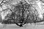 _DSC7644-Leafless-willow