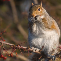 Evolution104-Squirrel