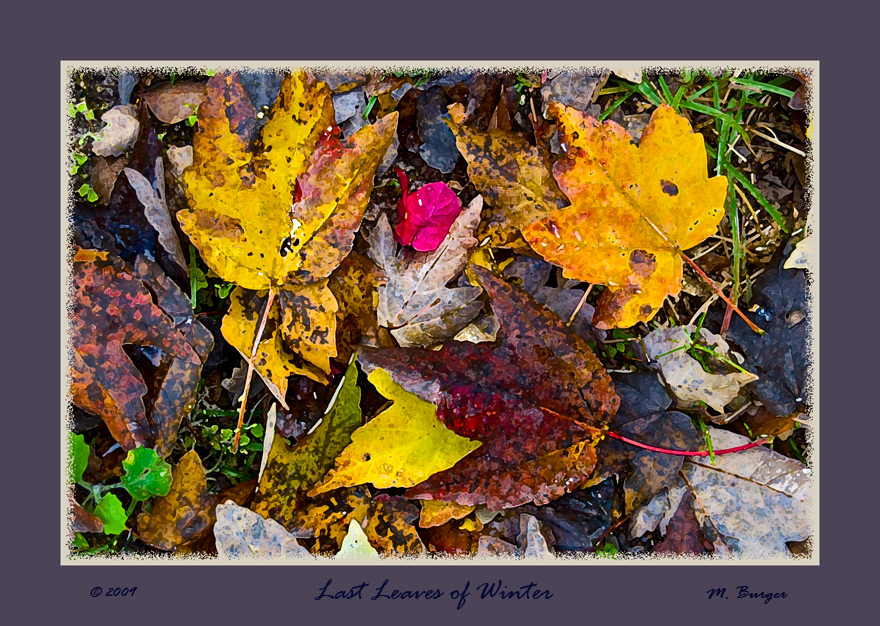 Last-Leaves-of-FL Winter-09JPG