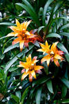 _DSC6654-Orange-tropical-flowers