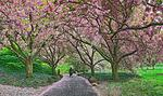 Cherry-lane-pano-crop