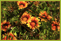 orange_flowers_web