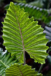 _DSC1329-Vertical-leaf