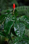 _DSC4086-Wet-leaves-and-red-flower