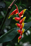 _DSC4089-Tropical-flower