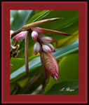 Tropical-FlowerCrop_7932