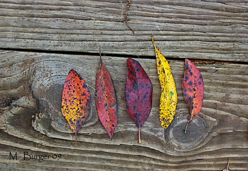 Copy of Leaves-and-Wood_4489