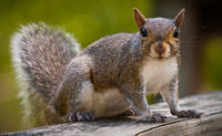 04 06 Squirrel5