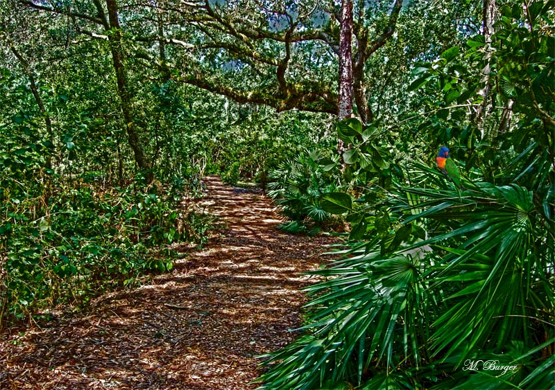 ParkPathHDR2_4484