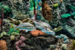 _DSC2000-two-fish