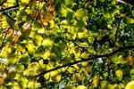 _DSC0172-light-thru-leaves