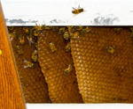 Florida Bees and Hive