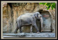 Elephant-01a-Framed-XL