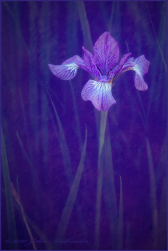 Evolution104 - Iris Impression